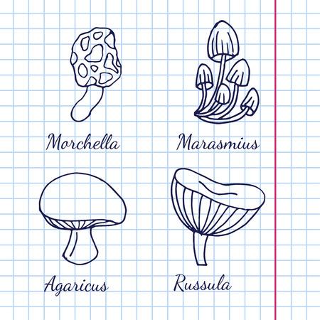 kinds: Vector illustration of different kinds of mushrooms on background of graph paper Illustration