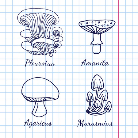 fleshy: Vector illustration of different kinds of mushrooms on background of graph paper Illustration