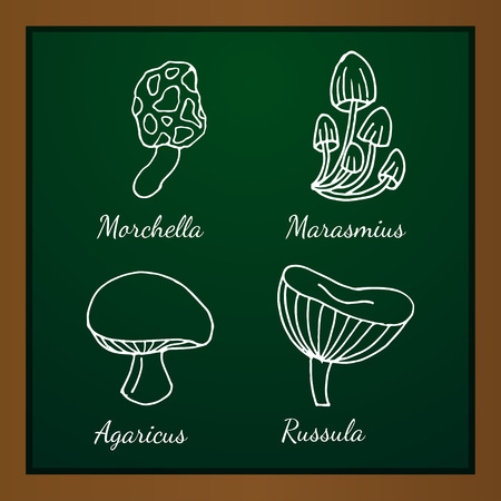 fleshy: Vector illustration of different kinds of mushrooms on background of green blackboard