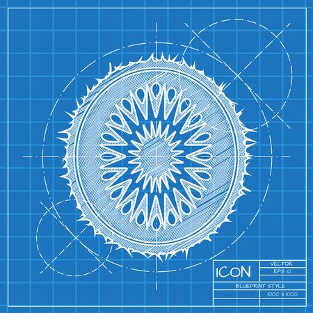 fruitage: Vector blueprint kiwi icon . Engineer and architect background.