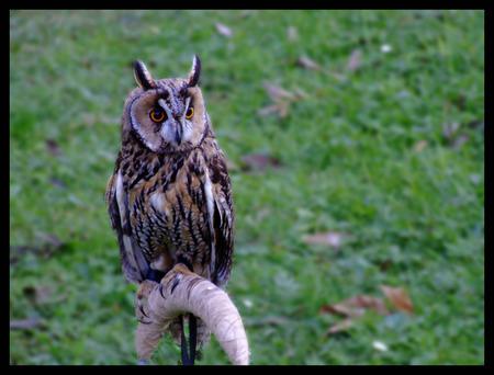 rear end: Owl Bird