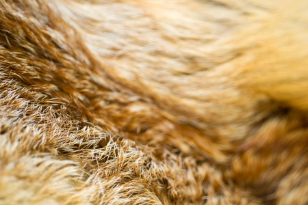 detailed wild fur texture of a fox photo