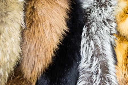silver fox: Several types of fur fabric, background material