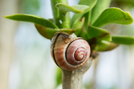 no movement: Snail is climbing on the tree with nature background