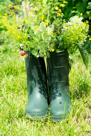 Boot Flowerpot in garden  photo