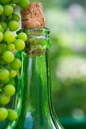 Wine bottle and young grapes on nature background  photo