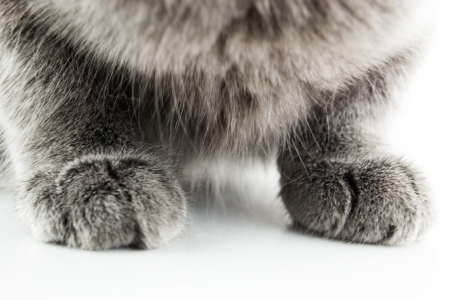true bred: Cat paw in detail