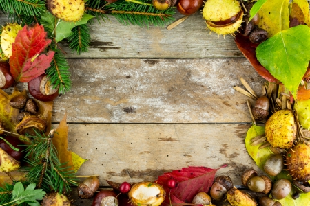 frame with nuts, acorns, chestnuts autumn fruits photo