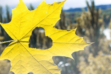 2 november:  autumn leaf with heart Stock Photo
