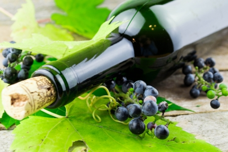 wine bottle and bunch of grapes  photo