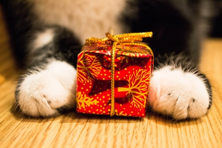 Cat paws with a red box