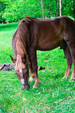 Portrait of horse in spring garden photo
