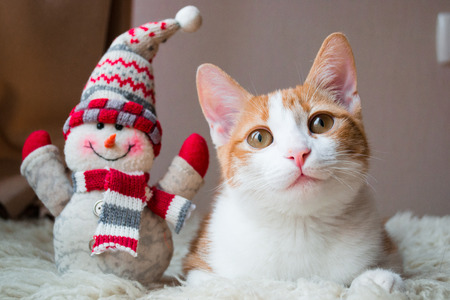 new year cat: Red cat siting near snowman