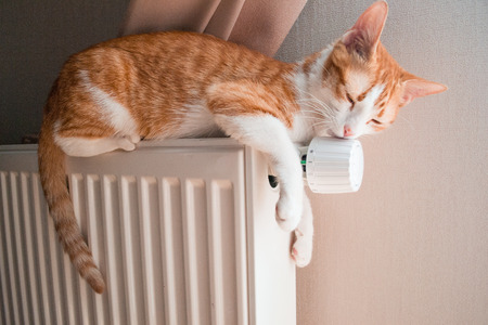 cat sleeping: Red cat relaxing on a warm radiator