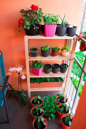 Small herb and flower garden built on small balcony garden Foto de archivo