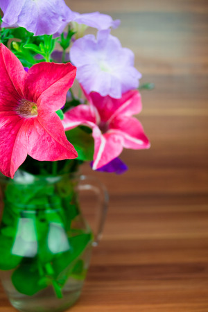 blooms: Colorful petunia blooms in a glass pitcher