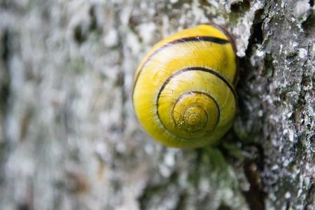 mollusca: Snails on wood Stock Photo