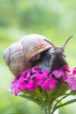 land slide: Snail on flower in summer garden