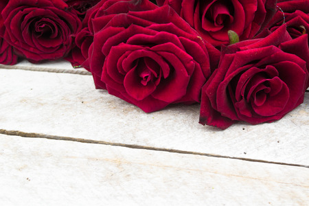 greeting card background: White Wood Background with Roses Stock Photo