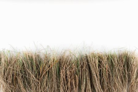 background with dry grass on white background with space for text