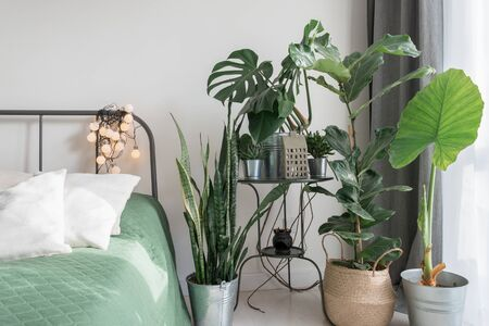 cosy light bedroom with tropical flowers decoration. urban jungle interior