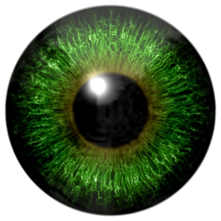 green and black: Green eye Stock Photo