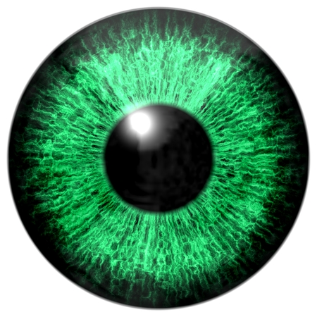green eye: Green eye Stock Photo