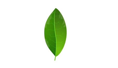 green background: Green leaf and white background