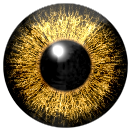 Brown eye, iris