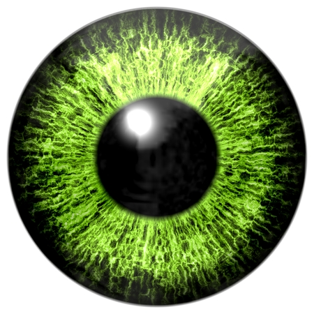 green eye: Green eye, iris Stock Photo