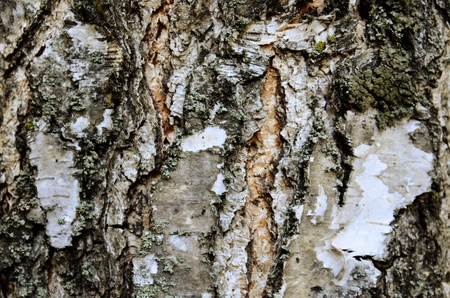 this is a texture of an old tree,  shot in central park.