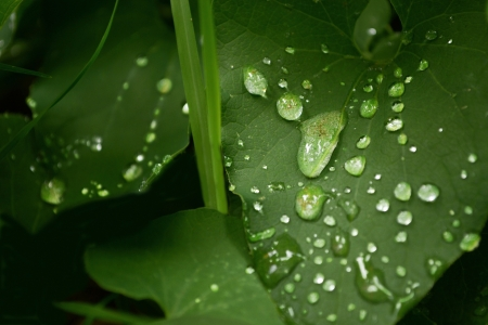 raindrops photo