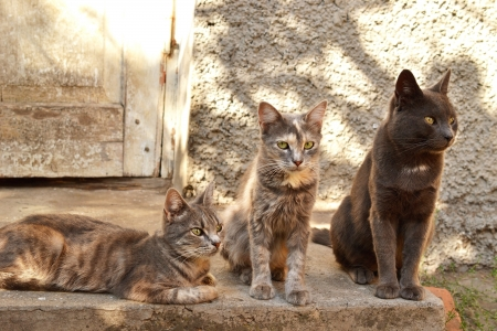 three cats sitting next to an old house photo