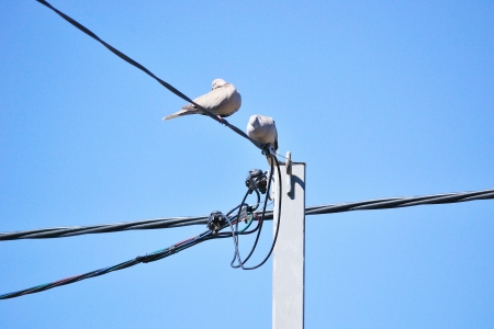 Pigeons on wires photo