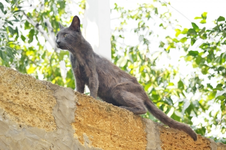 gray cat jumped on the wall