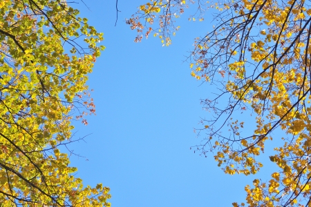 autumn branches of trees against the sky photo