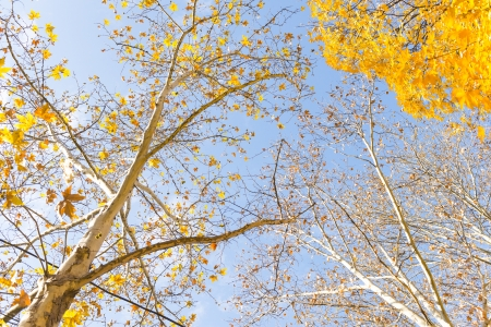 branch with yellow leaves against the sky photo