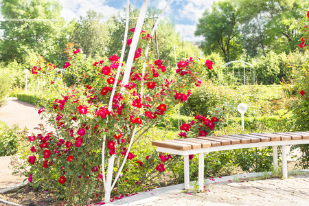 bench and red roses in the park Stock Photo