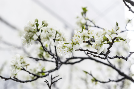Abstract blossoming branch Stock Photo