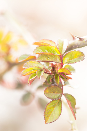 The first spring leaves Stock Photo