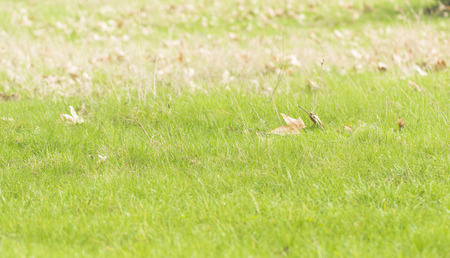 young green grass and old leaves Stock Photo