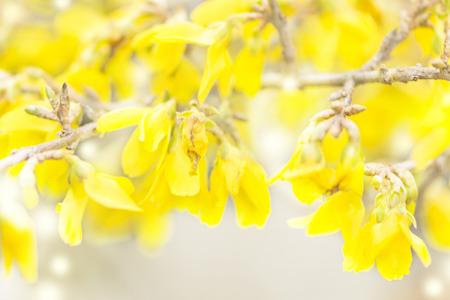 branch yellow flowering plant