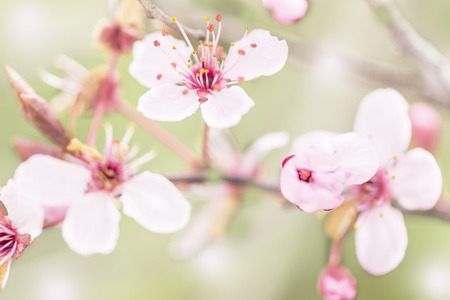 flowering trees macro