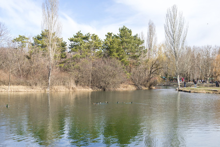 Lake in the park in early spring