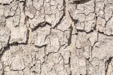 cracked tree bark close-up