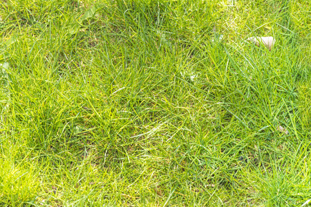 young spring a thick green grass Stock Photo