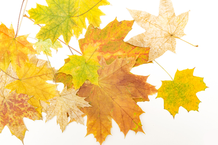colorful maple leaves on white Banco de Imagens