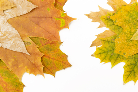 green and red maple leaves on both sides Banco de Imagens