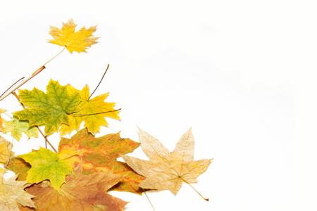 maple leaves in the left corner