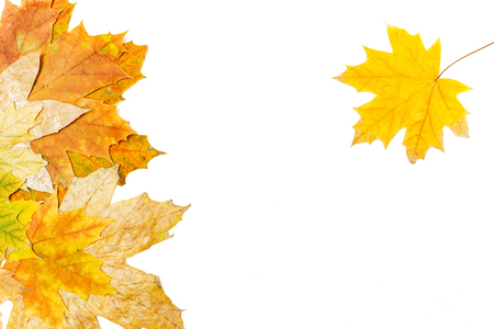 several autumn maple leaves on a white background Banco de Imagens